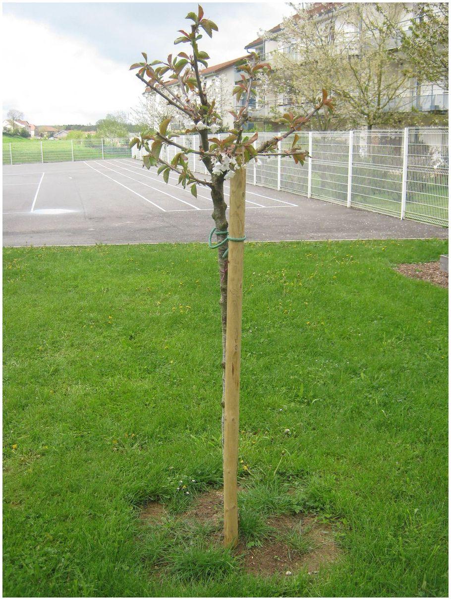 Ils ont plant un arbre ecole el mentaire de sa ne for Plante un arbre